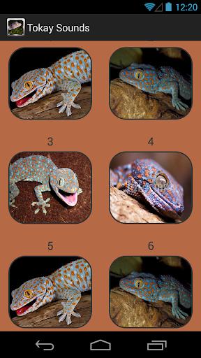 Tokay Gecko Sounds