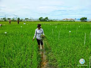 Photo: Happy Smart Farmer - CFPAR for Kampong Speu province farmers , Lvea Village, Ang Popel commune, Korng Pisey district, Kampong speu province (10-12 Sep 2014)