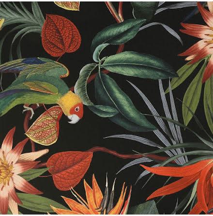 Superfresco Tapet med papegojor i svart Graham & Brown 108602