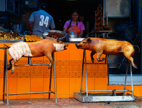 Photo: Roast pigs ready for the lunch crowd, Cuenca