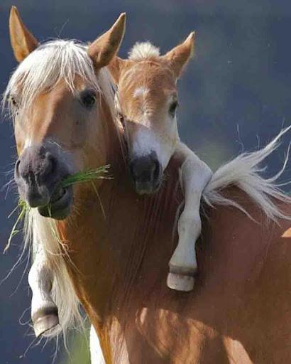 Quebra-Cabeça Cavalos