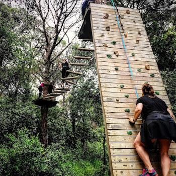 El Bosc Vertical Dosrius