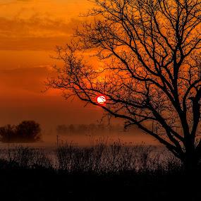 Sky Full of Dawn by Troy Snider - Landscapes Sunsets & Sunrises ( sky, dawn, red sky, tree, fog, light, sun, mist )