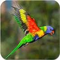 Colorful Birds icon