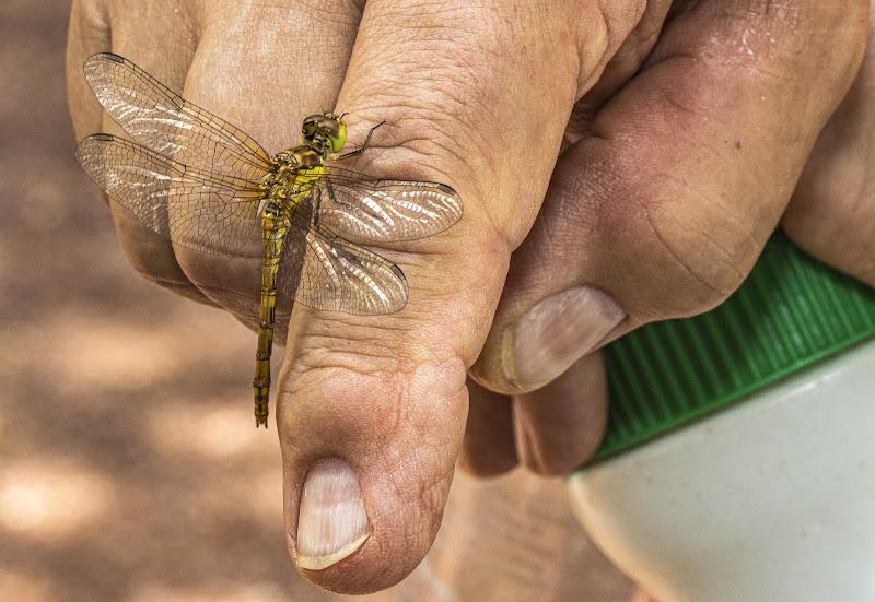 L'uomo che sussurrava alle libellule di Buttero59