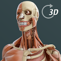 Visual Anatomy 3D | Human icon