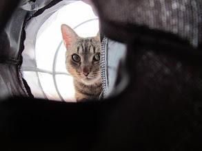 Photo: Ein Rascheltunnel gehört in jeden Katzenhaushalt