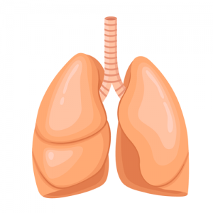 lungs---body-parts---english-for-kids---lingokids-