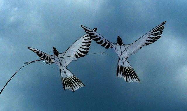 Птица-змей
