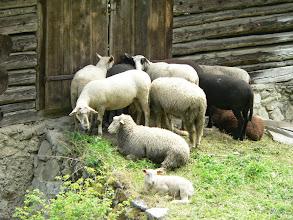Photo: Graubünden, Stierva, Sanagn