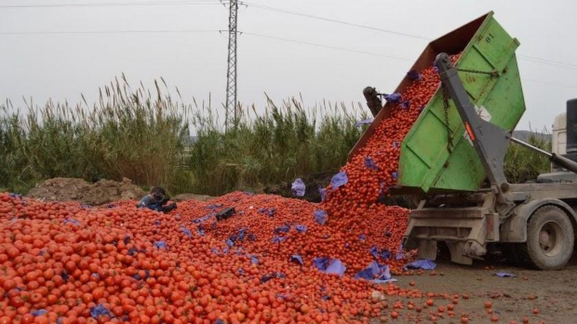 El tomate de Almería pierde valor en los mercados en los últimos años.