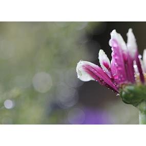 Che poi tutto dipende dallo sfondo dei nostri sogni by Stefano De Maio Fotografia - Flowers Flower Gardens