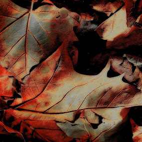 by Adrian Konopnicki - Nature Up Close Leaves & Grasses ( fall leaves on ground, fall leaves, pwcfallleaves )