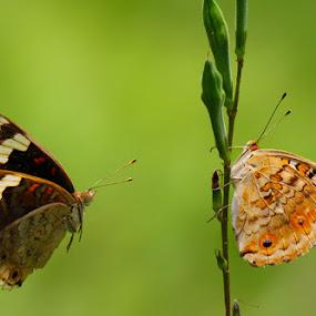 PENDEKATAN by B Iwan Wijanarko - Animals Insects & Spiders