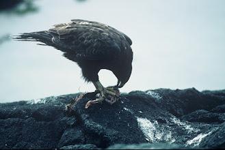 Photo: Punta Espinosa, Fernandina, Galapagos Islands.