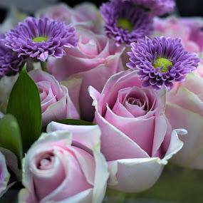 Lovely bouquet by Maria Epperhart - Flowers Flower Arangements ( arrangement, nature, stores, garden, people, roses,  )