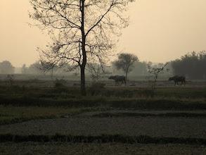 Photo: Wasserbüffel auf ihrem ...