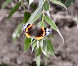 Photo: Schmetterling leider etwas verwackelt