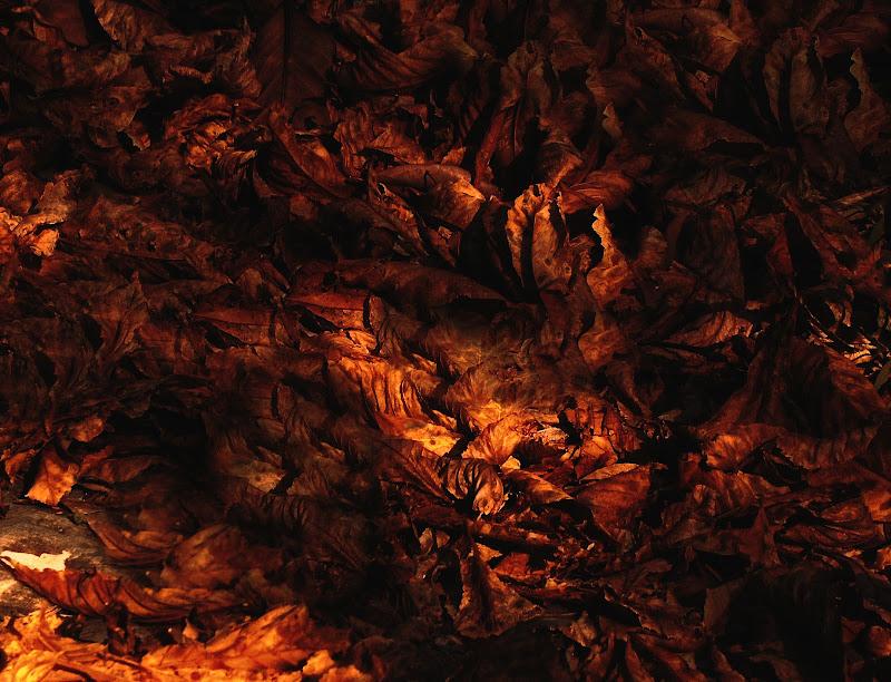 Texture di foglie di Gianva