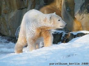 Photo: Knut freut sich ueber die verschneite Anlage :-)