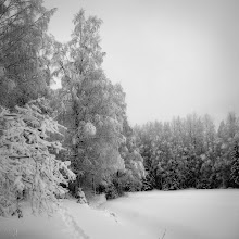 Photo: More motherflipping snow One of the very few good things about snow is that nature can get quite pretty. #monochrome  #monochromephotography  #blackandwhitephotography