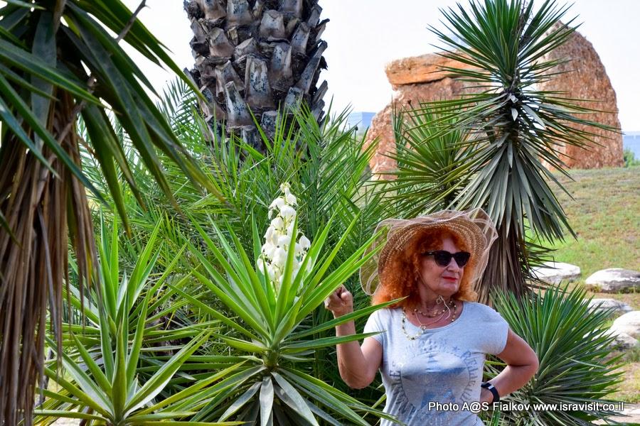 На экскурсии в саду кактусов.
