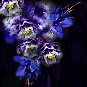 VIOLET 1 by Carmen Velcic - Digital Art Abstract ( abstract, blue, violet, flowers, digital )