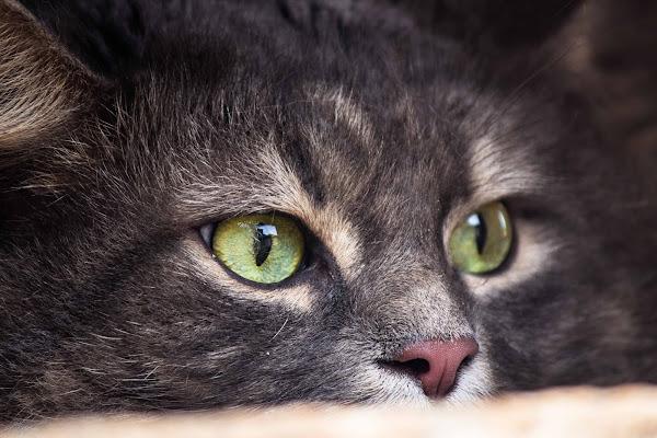 Gli occhi di gatto di g.paciphoto
