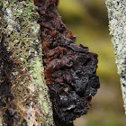 Brown Witches' Butter