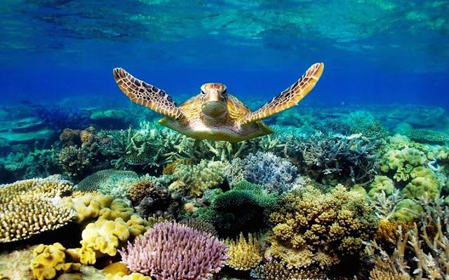 Turtle Tab