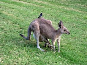 Photo: Around Hermitage Wine, Food, Weddings, Boutique accommodation Hunter Valley...and kangaroos