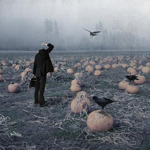 pumpkin-field.jpg