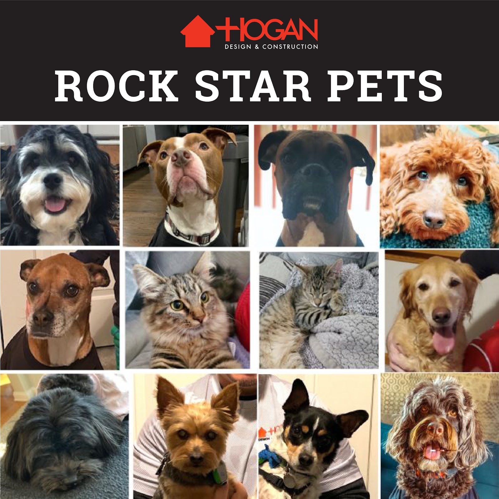 Hogan Design & Construction Canine and Feline Family Member Collage