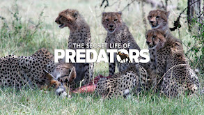 Secret Life of Predators thumbnail