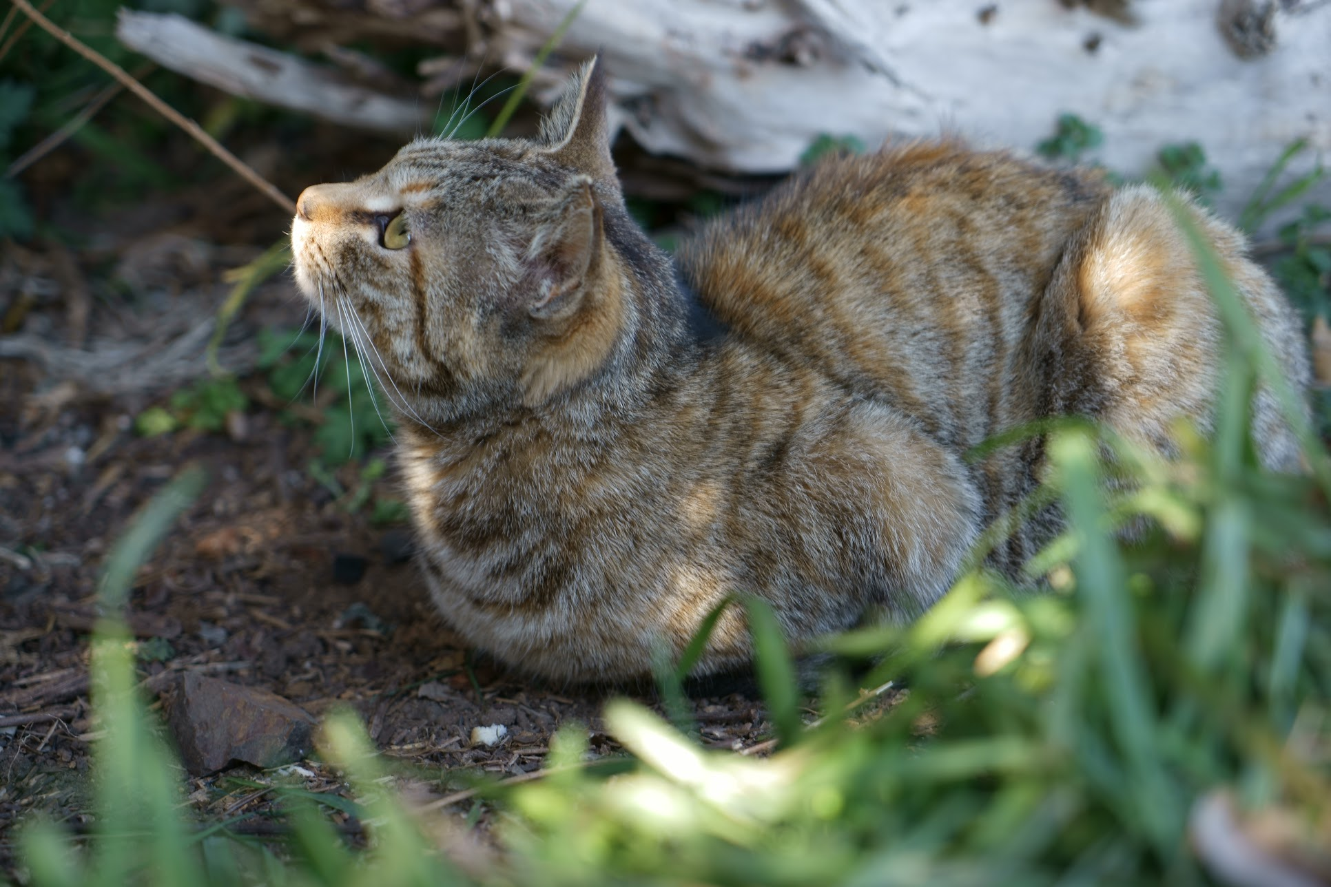 播州赤穂大塚海岸の猫