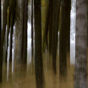 Slow shutter by Alexis Courthoud - Nature Up Close Trees & Bushes ( panning, nature, slowshutter, trees, bosco )