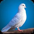 Bird Wallpaper 4K APK