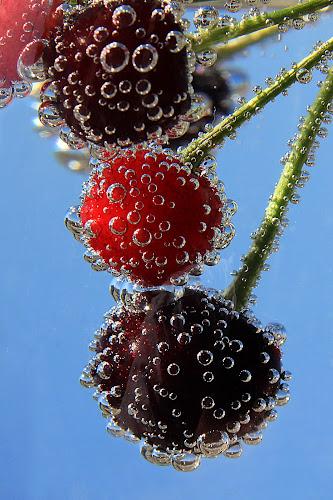 Cherries by Besnik Hamiti - Food & Drink Fruits & Vegetables ( cherry, cocktail, cherries )