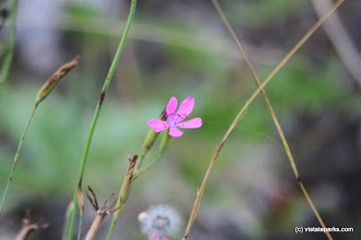 Photo: Pinks at Lowell Lake State Park by Lene Gary