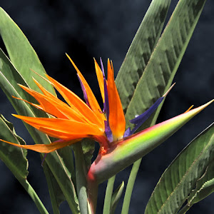 C:\Documents and Settings\Joe\My Documents\My Pictures\1Pixoto\New\Bird of Paradise.jpg