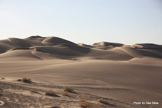 Photo: (Year 3) Day 37 - So Many Sand Dunes at Glamis