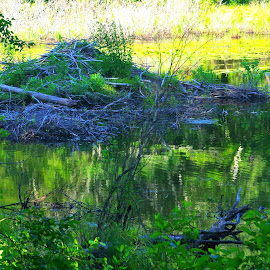 Beaver Den by Martin Stepalavich - Nature Up Close Other Natural Objects