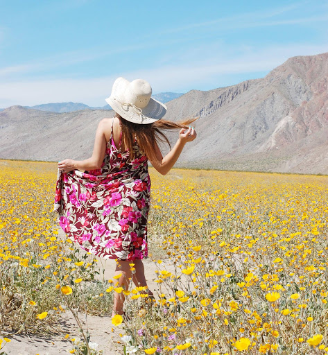 Colorful wildflowers bloom in Anza-Borrego Desert State Park in Southern California.