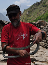 Photo: Hodgson snake in the village after Philim