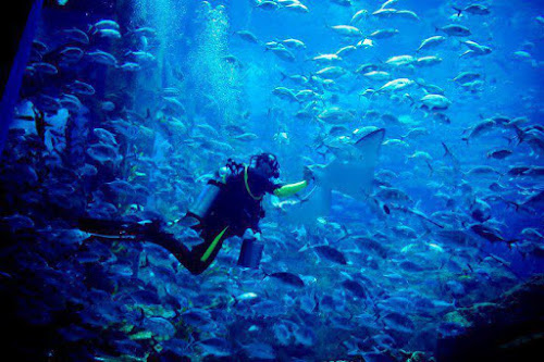 Photo Dubai Aquarium and Underwater Zoo