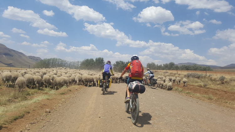 Teigue Payne and his fellow riders encounter the local traffic on the Bastervoetpad Pass in the Eastern Cape. Picture: TEIGUE PAYNE
