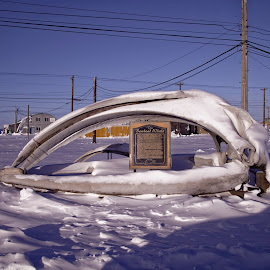 Bow Head Whale Skull by Rev Marc Baisden - City,  Street & Park  Street Scenes ( adventure, barrow, bones, alaska, hunting, travel )