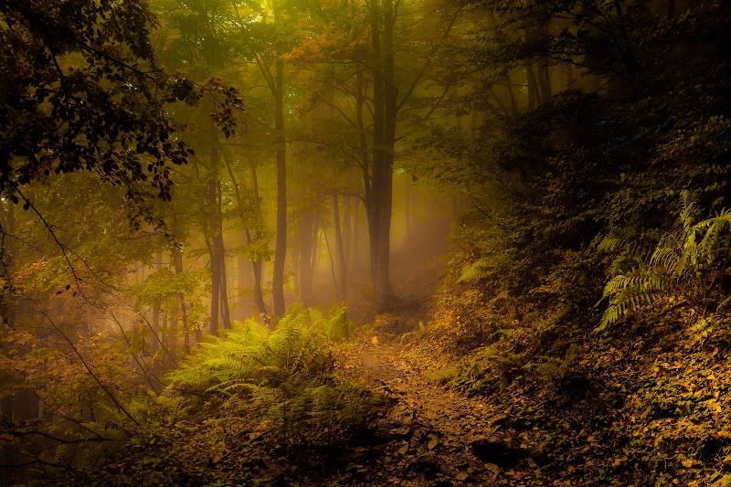 L'anima del bosco di NickAdami