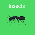Insects Preschool Toddler