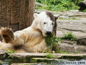 Photo: Knut nimmt sich wieder die Pflanze vor ;-)